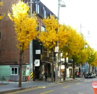 Where to eat in Garosugil Street Sinsadong Trazy Your Travel