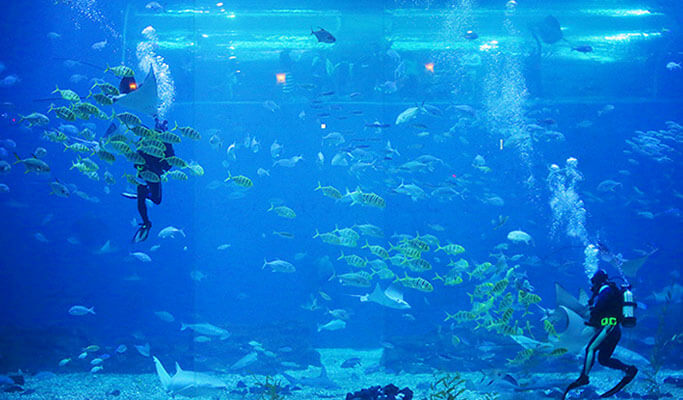 Aqua Planet Jeju Discount Ticket