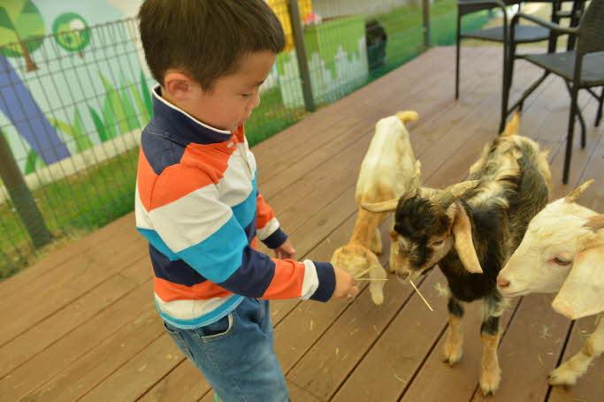 Animal Fun: World Dog Park Ticket