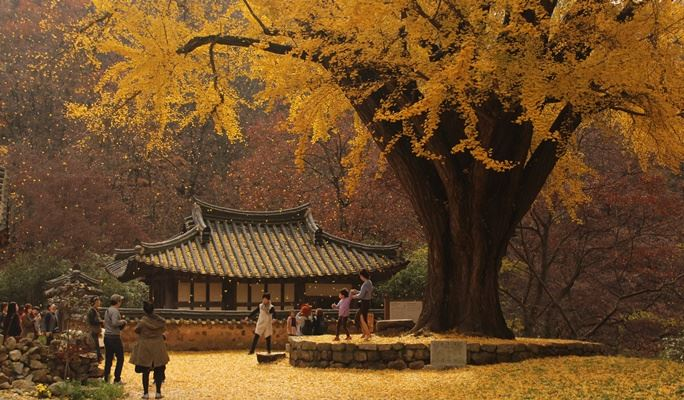 Image result for gyeongju autumn