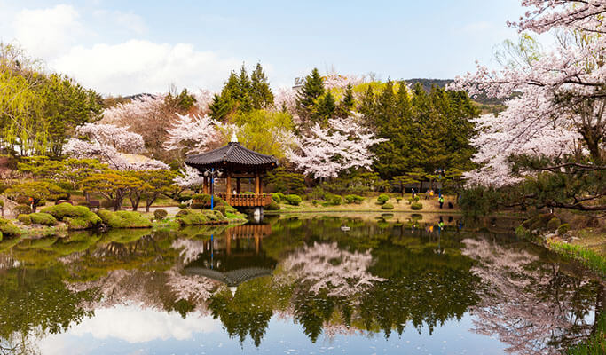 Spring Special: Gyeongju Cherry Blossom Festival Shuttle Bus Package (Apr 1~14)