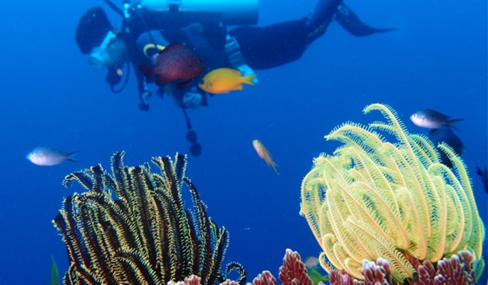 Fun Diving in Jeju Island- For Pros