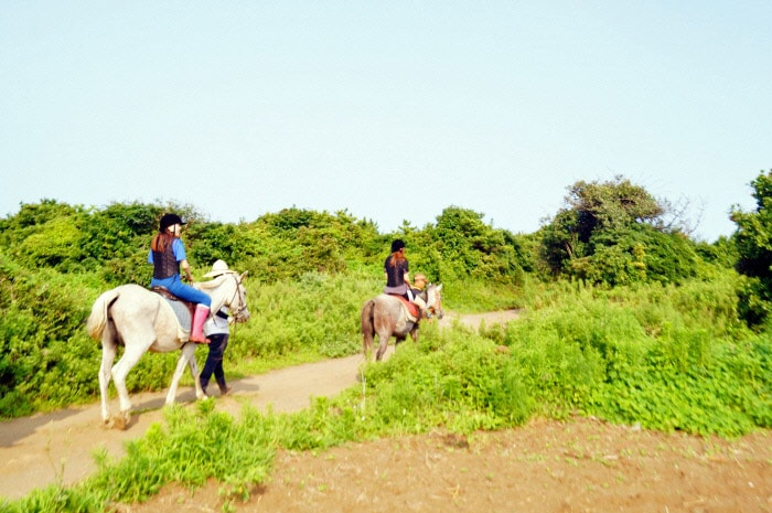 Horse Riding on Jeju Island's Beach