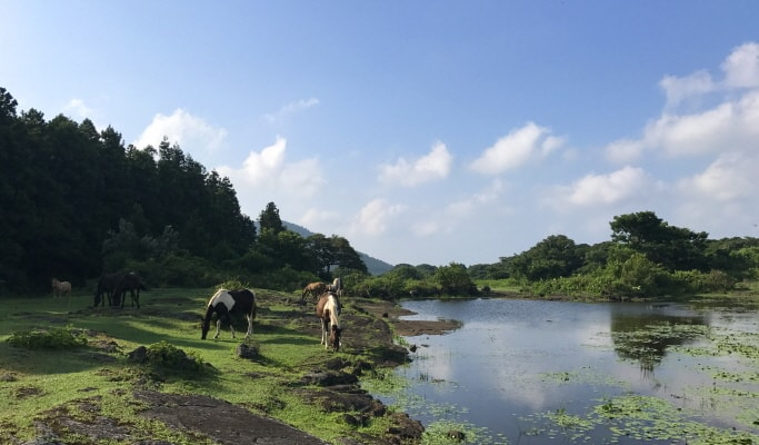 Off Road Ride in Jeju Island