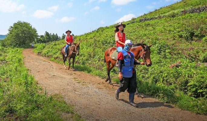 Horse Riding on Jeju Island's Open Hillside