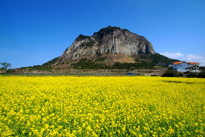 Jeju 1 Day Bus Tour Package (+Lunch)