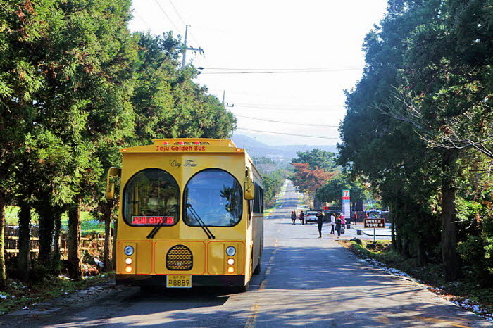 Jeju Island Golden City Tour Bus: Hop On & Hop Off 1 Day Pass