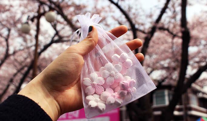 Spring Special: Jinhae Cherry Blossom Festival 2017 1 Day Tour (Apr 1~10)