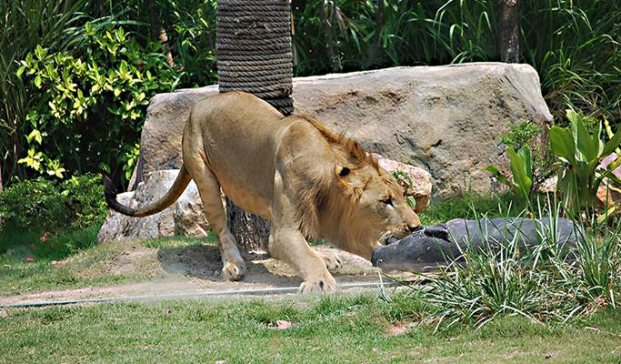 how to get to khao kheow open zoo from pattaya