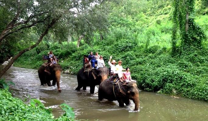 Khao Yai National Park 1 Day Tour with Elephant Ride