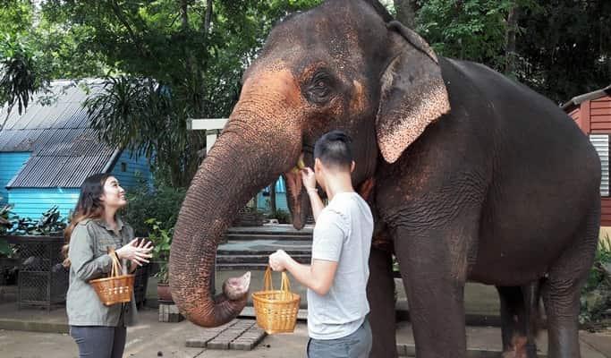 Khao Yai National Park & Thai Cooking Class 1 Day Tour (+ Elephant Feeding / Riding)