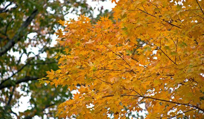 Image result for Jeju university autumn