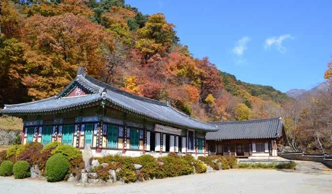 Korea Autumn Foliage 1 Day Tour (Depart from Busan, Oct 25~Nov 8)