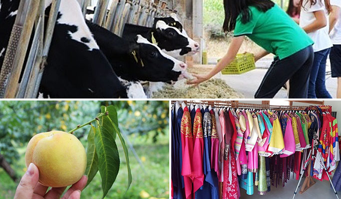 Milk Cow Farm + Peach Farm + Korean Folk Village 1 Day Tour (~Oct 12)