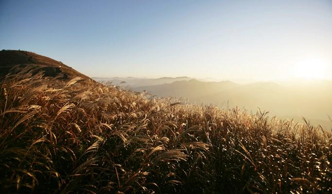 Mindungsan Mountain Silver Grass Festival 1 Day Tour (Oct 14 ~ 29)