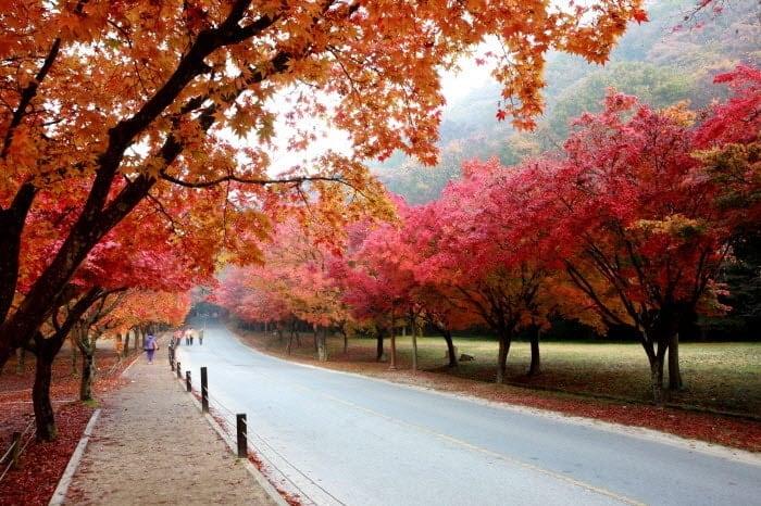 Korea Fall Foliage Shuttle Bus Tour: Naejangsan National