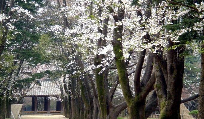 Seoul Vicinity Tour 4 in 1: Nami Island + Petite France + Garden of Morning Calm + Strawberry Picking