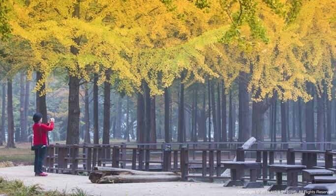 Nami Island and Petite France in 1 Day