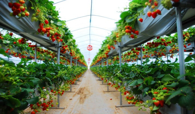 Seoul Vicinity: Nami Island + Garden of Morning Calm + Strawberry Picking