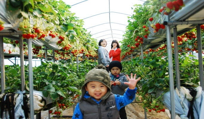 Seoul Vicinity: Nami Island + Petite France + Strawberry Farm Package