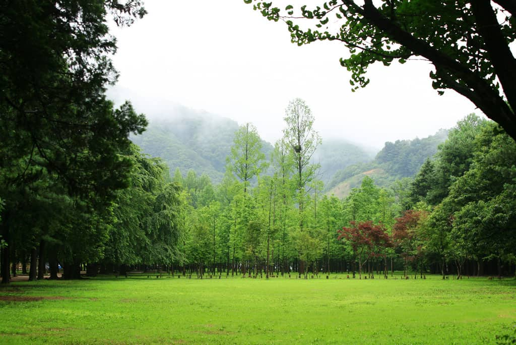 Seoul Vicinity Tour 4 in 1: Nami Island + Petite France + Rail Park + Garden of Morning Calm