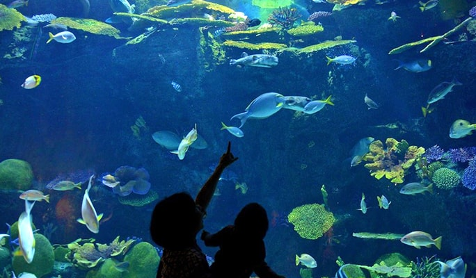 SEA LIFE Bangkok Ocean World Discount Ticket
