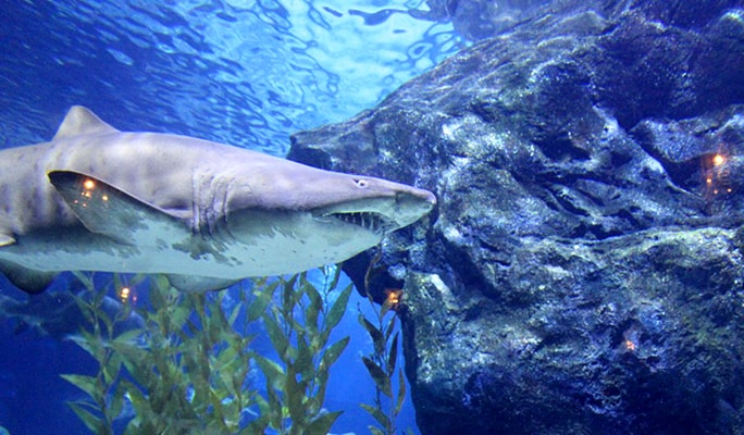 30% OFF SEA LIFE Bangkok Ocean World Ticket - Trazy, Your ...