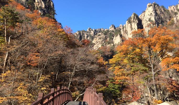 Seoraksan National Park Autumn/Fall Foliage & Wondae-ri Birch Tree Forest 1  Day Tour - from Seoul (Oct 1~Nov 8)