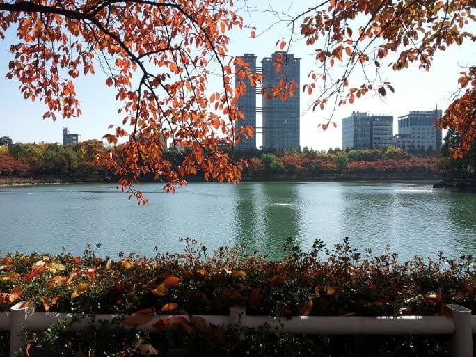 Korea Autumn Foliage 1 Day Tour (Seoul ↔ Vicinities, Oct 9~22)