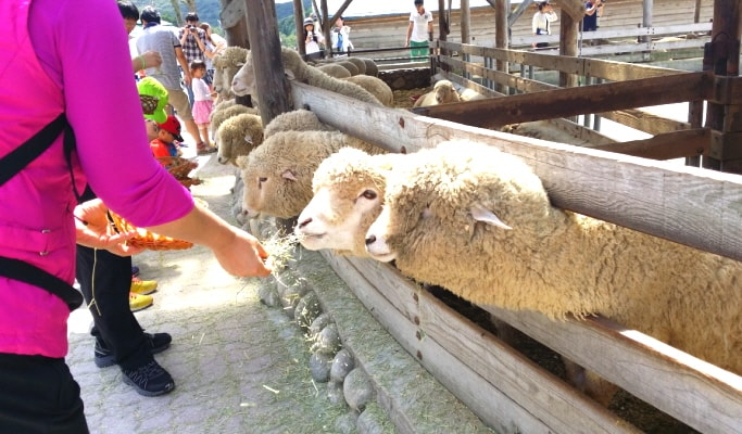Seoraksan National Park Private Tour (+ Nami Island/ Naksansa Temple/ Daegwallyeong Sheep Farm)