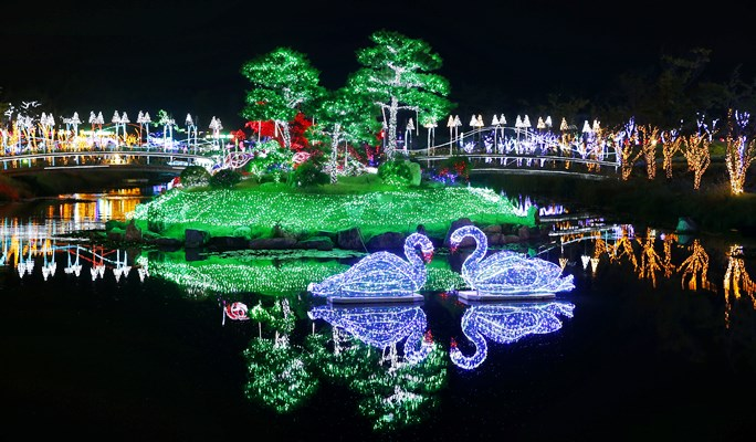 Image result for Taean Lily Festival