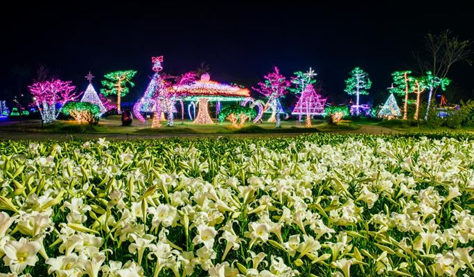 Spring Special: Taean Tulip/Light Festival 2017 & Strawberry Farm Shuttle Bus Package (Apr 16~May 10)