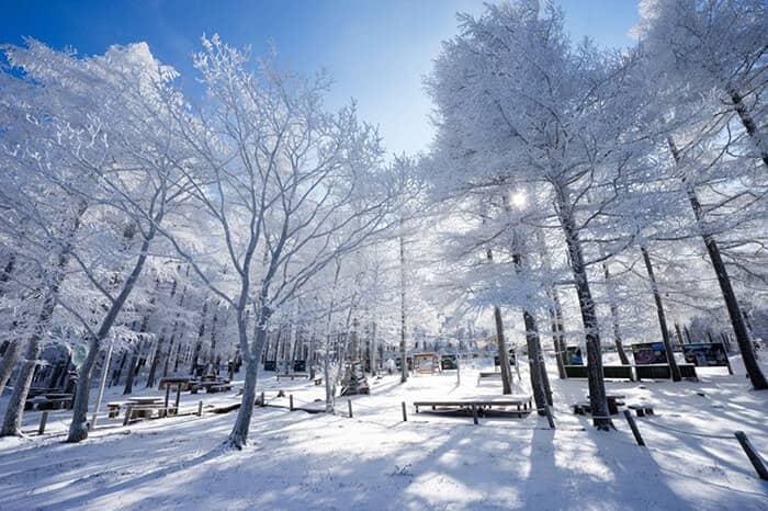 2018 Taebaeksan Mountain Snow Festival Shuttle Bus Package (Jan 19~Feb 11)