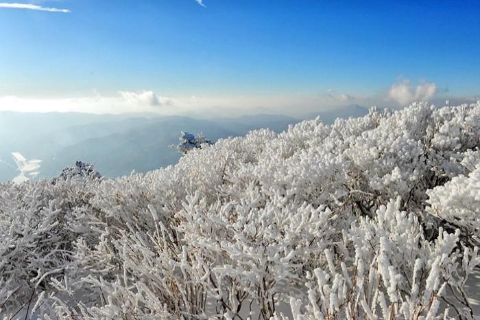 2017 Taebaek Snow Festival Shuttle Bus Package (Jan 14~15)